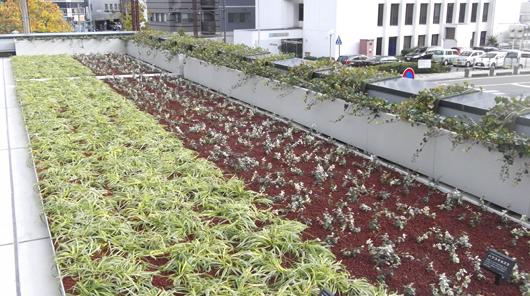 屋上・壁面緑化